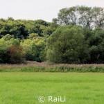 Wiese neben der Ruhr