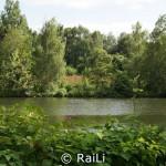 Ruhr mit urwüchsigem Bewuchs