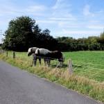 Pferdekoppel an der Düssel in Gerresheim